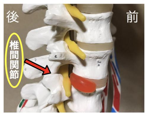 ベンチプレスで腰痛になる原因は「腰を反りすぎている」から 椎間関節